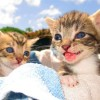 Happy and healthy kittens